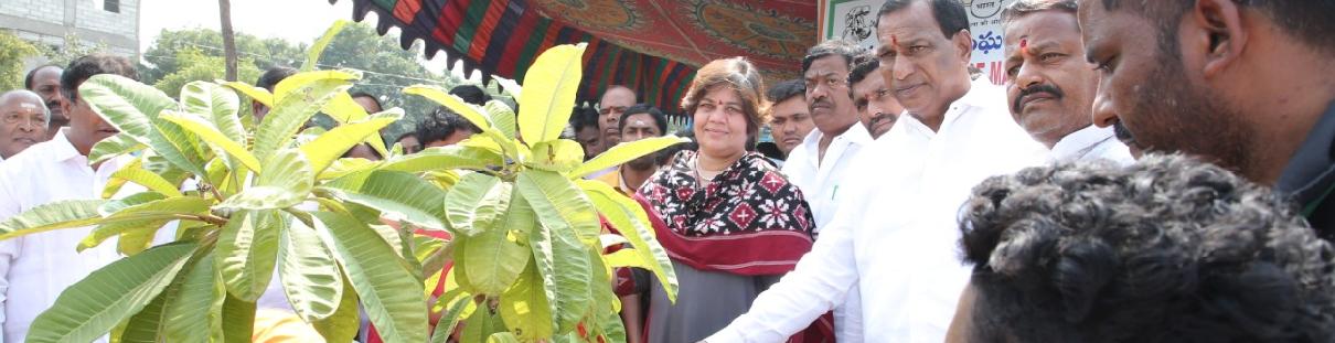 TKHH Plantation at DERCC Park at Dulapally Area.
